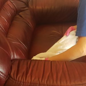 Leather cleaning Doncaster – Professional Office leather cleaning